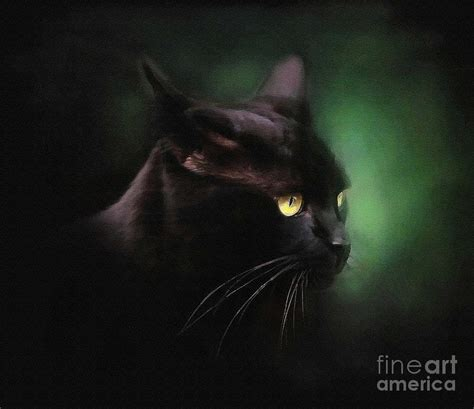 Black Cat Painting by Robert Foster