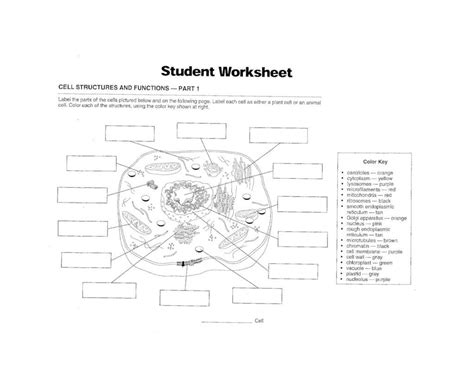 Cell Parts And Functions Worksheet Pdf | Reviewmotors