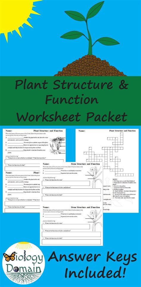 Worksheets include basic plant structures, root structures
