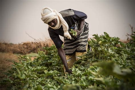 Economic recovery and food security activities in Mali in