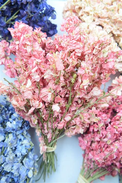 Delphinium bunch dried small SALE! - Dried flowers - Daisyshop