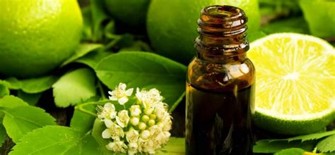 Lime Essential Oil - Uses, Benefits & How to Apply