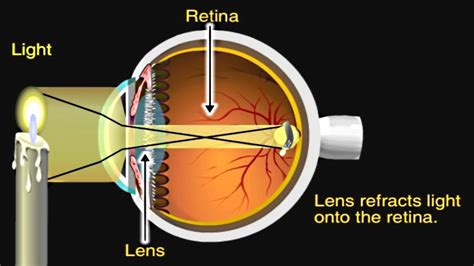 How the Eye Works Animation - How Do We See Video